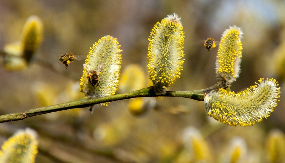 5 Tips to Minimize Spring Allergies