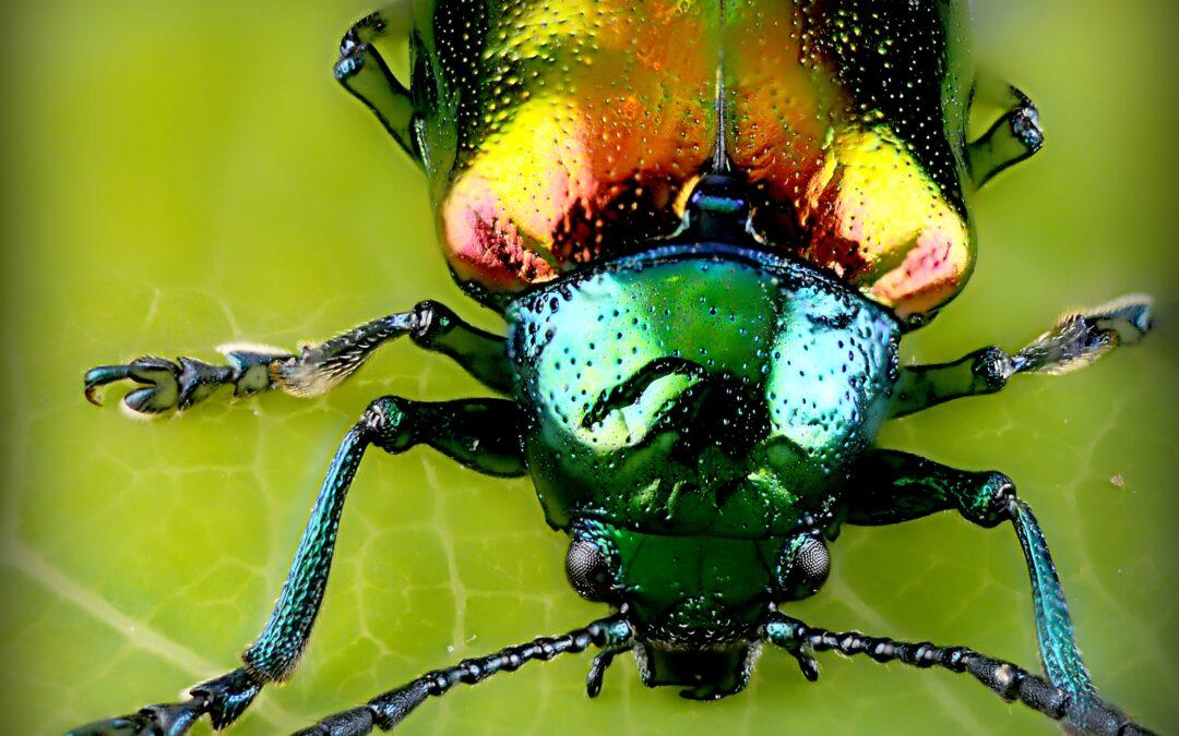 Keep Summer Pests at Bay